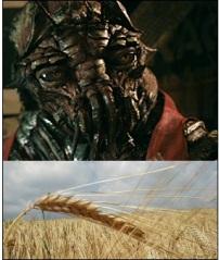 wheat face